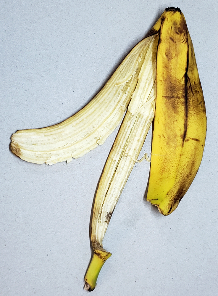 How to draw a banana_banana peel reference 01