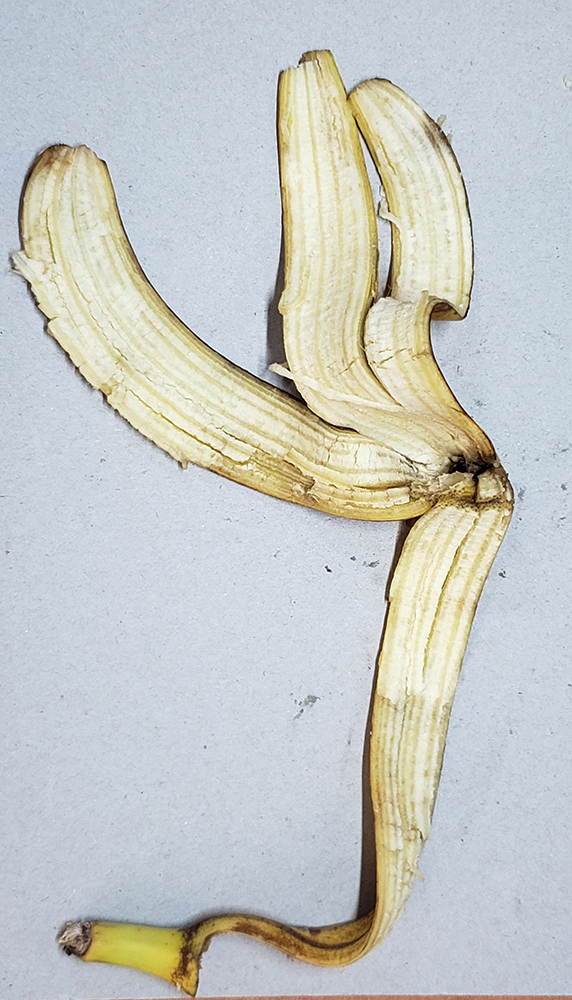 How to draw a banana_banana peel reference 06