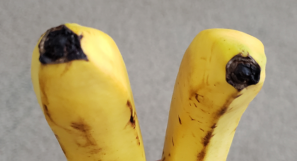 How to draw a banana_base-bottom front view reference
