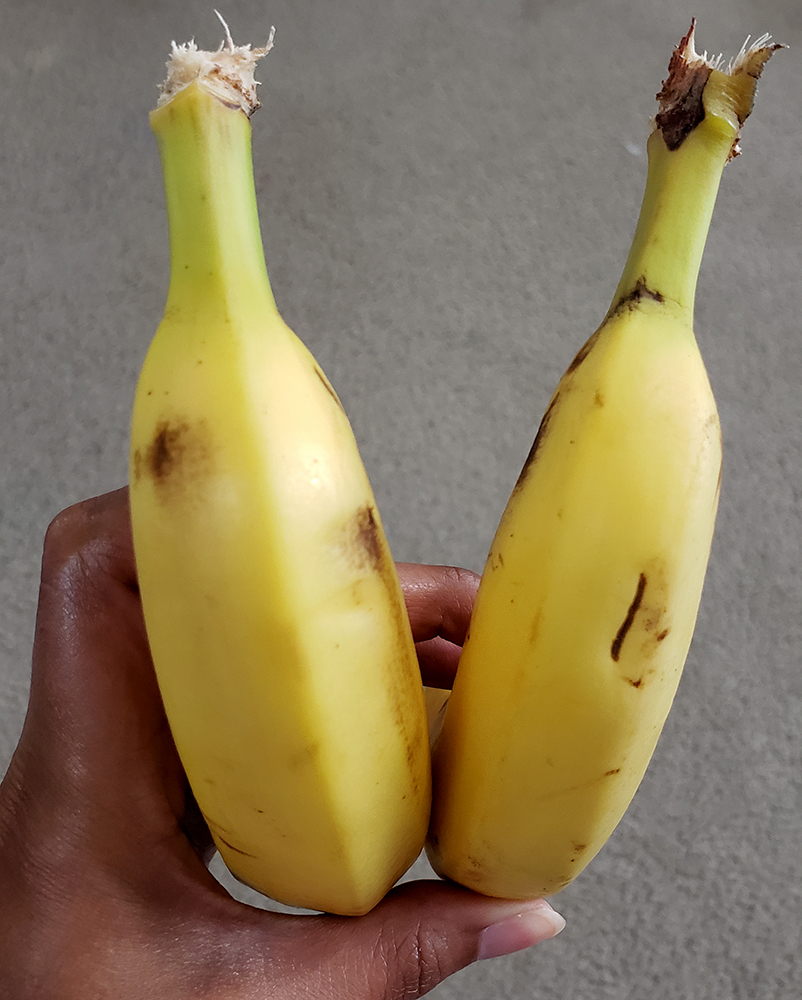 How to draw a banana_rearview close up reference