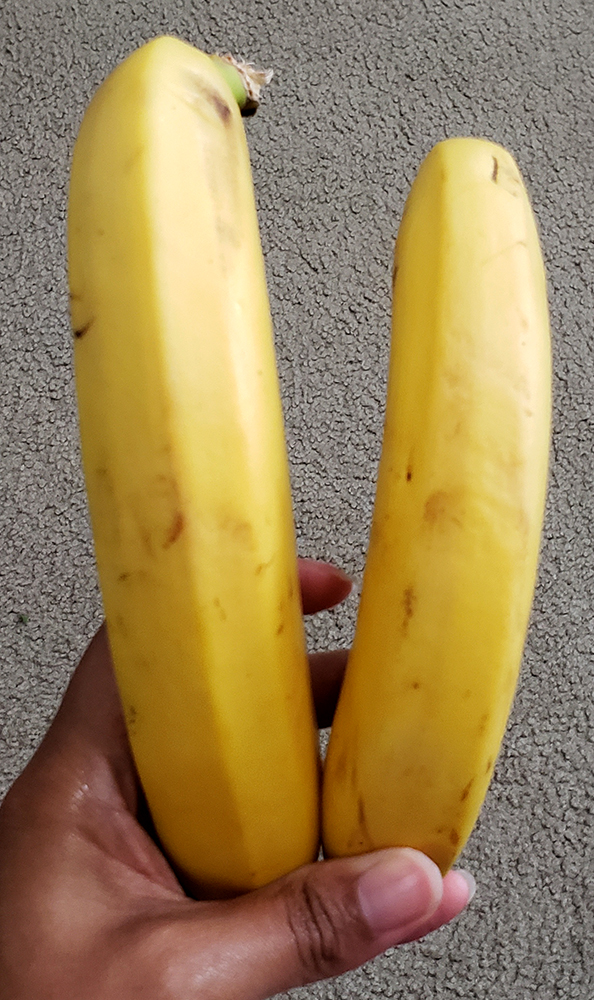 How to draw a banana_rearview reference