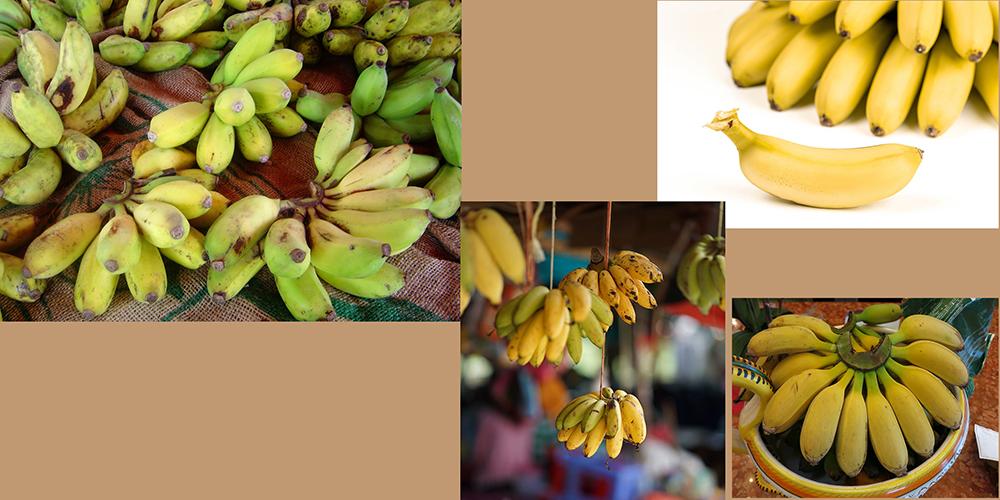 how to draw a banana_Ladyfinger_Goldfinger bananas