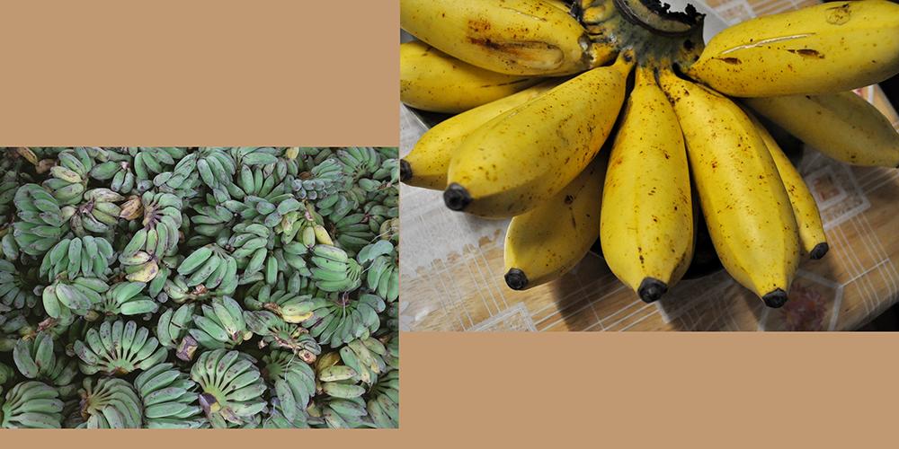 how to draw a banana_Pisang Raja bananas reference board