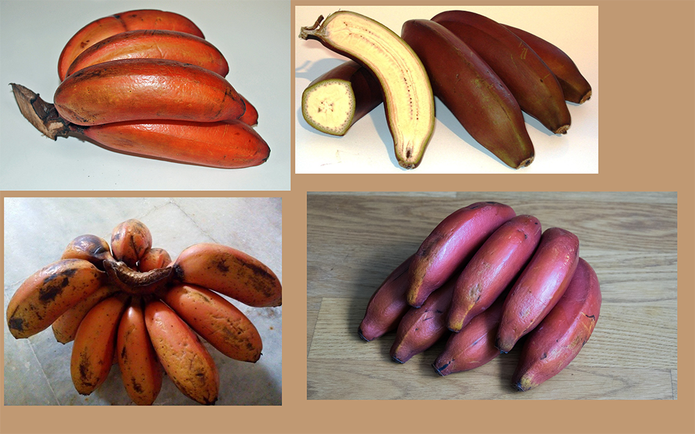 how to draw a banana_Red bananas