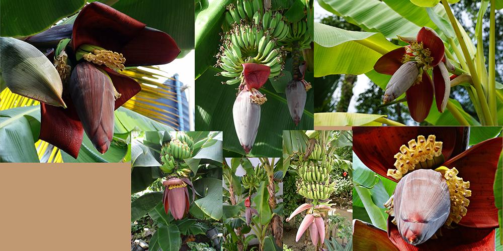 how to draw a banana_banana tree blossoms reference board