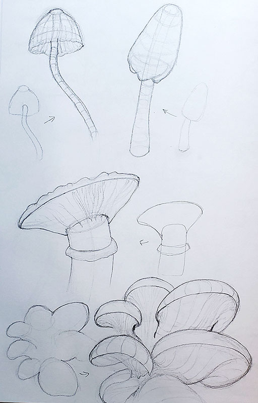 How to draw a mushroom_Exploration & study sketches 03