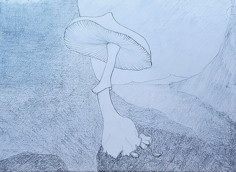 How to draw a mushroom_Light & shadow 05