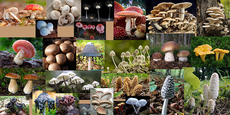 How to draw a mushroom-Reference board