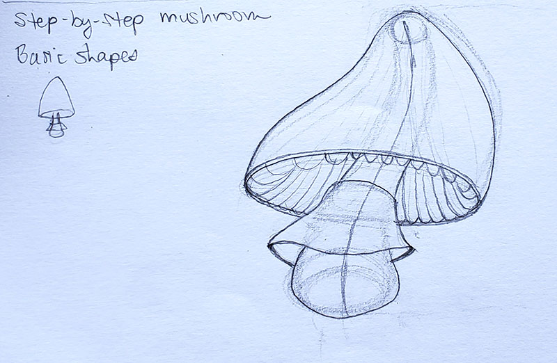 How to draw a mushroom_Step-by-step 07