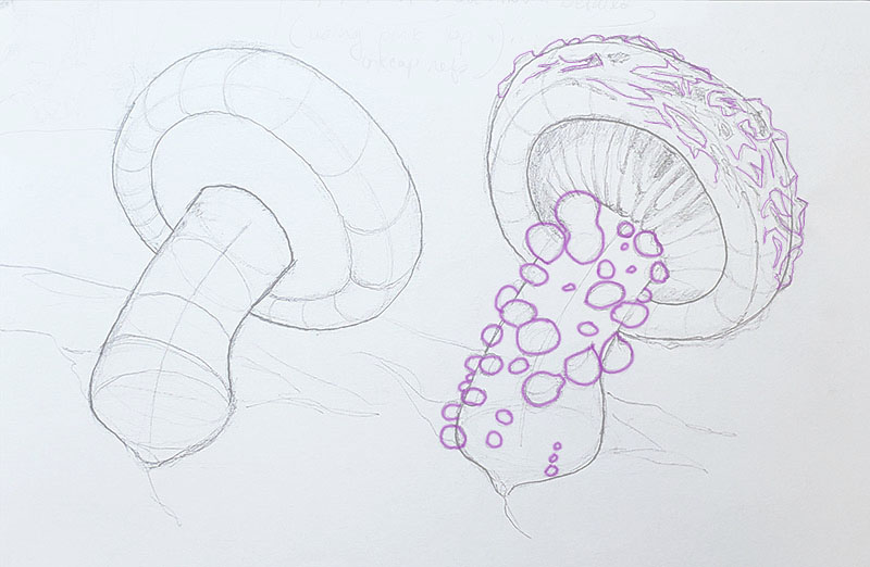 How to draw a mushroom_about details 02
