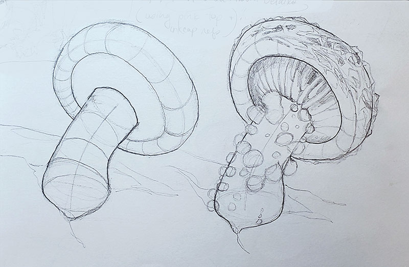 How to draw a mushroom - about details