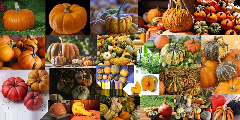 How to draw a pumpkin_Cucurbita pepo
