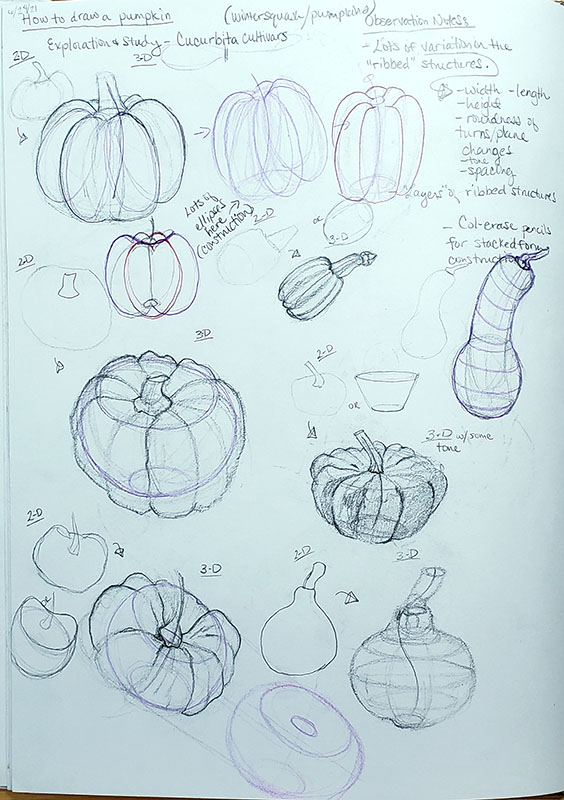 How to draw a pumpkin_Exploration and study sketches 01