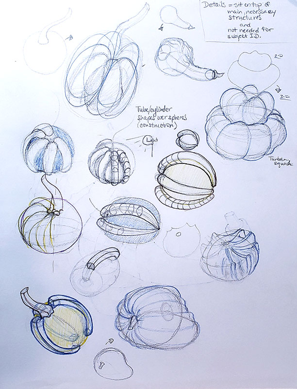 How to draw a pumpkin_Exploration and study sketches 02