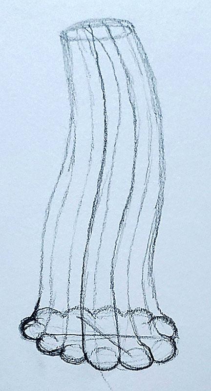How to draw a pumpkin_Step by step 05d pumpkin stem