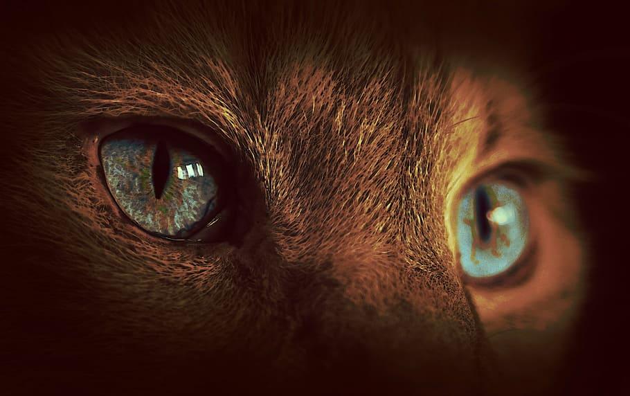 reflected light - reflectors animal eyes